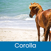 Vacation Rentals Corolla, Outer Banks, NC | Carolina Designs