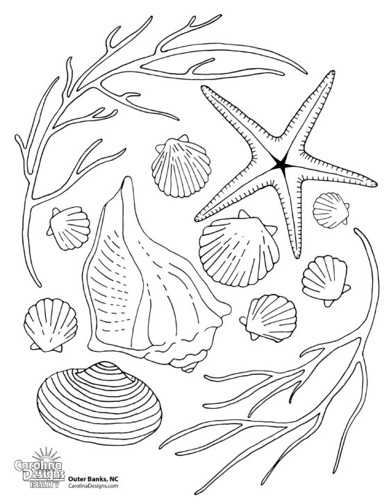 A printable coloring page of various sea shells