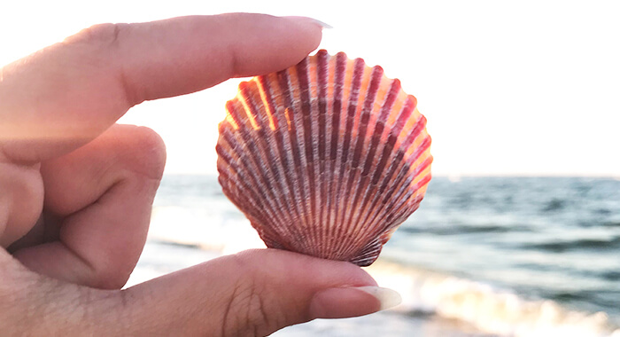 Obx Beachcombing Shell Guide