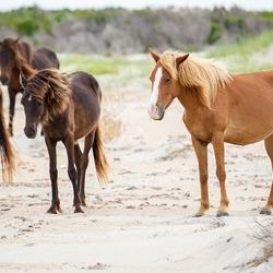 Corolla, NC Oceanfront & Beach Rentals